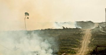 Palm oil: a decisive vote of the European Parliament